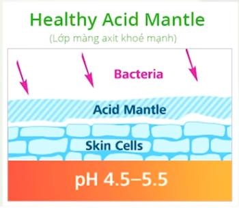 lớp acid mantle của da